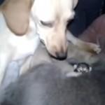 犬小屋で仲良く一緒に子育てをする母犬と母猫にホッコリ♡