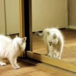 鏡に映った自分の姿を見て驚くニャンコたちの面白かわいい映像集