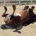 「出もの腫れもの所嫌わず」は馬とて一緒。豪快にやっちゃいました!