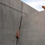 驚異的な身体能力!|身長の何倍もある高い壁を登ろうとする子猫