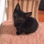 「みゃ~~~~~ん♪」と長い鳴き声をする面白かわいい子猫