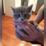 「私を飼って」と林の中からやって来た小さな子猫の新しい家族との出会い 6枚