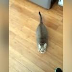 どうしたんだ!?|飼い主が歌を歌うたびに飛びかかってくる猫