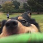 フリスビーで遊ぶ3匹の愛犬を撮影していた7歳の女の子に訪れた悲劇