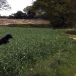 草原に入ると興奮してピョンピョン飛び跳ねるカンガルーみたいなワンコ