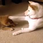 子犬のオヤツを狙ってちょっかいをかけていた先輩犬に思わぬ結末が…