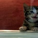 「ひと晩だけ」と保護した迷子の子猫。先住の保護犬に会わせてみた結果。