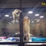 ペットショップで繰り広げられた子猫と子犬の感動的な光景♡