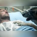 交通事故に遭ったご主人様の無事を誰よりも喜ぶ愛犬。しかし、シーンが巻き戻されて明かされる悲しい真実とは?