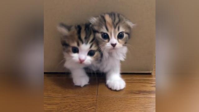 こんな箱あったらいいなぁ!?| 箱の中からかわいいニャンコが続々と出てきた!