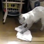 任せにゃさい!|猫の手も借りたいとき、床を雑巾がけしてくれるニャンコ