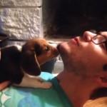 遠吠えの練習をする小さなビーグル犬。可愛い遠吠えに思わず胸キュン♡