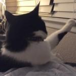 どうしてなのか(笑)|うちの猫はいつも何かに足をちょこんと乗っけている 8枚