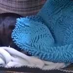 飼い主に起こされ、文句を言いながら二度寝してしまう寝坊助なカワウソ