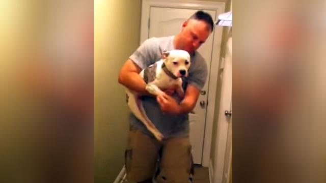 ハンディを抱えた犬。半年振りに再会したご主人様に体を引きずりながら近寄る姿に心打たれる
