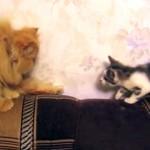 先住猫に猫パンチされて奇妙な動きを見せる新入りの子猫(笑)