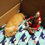 「色々あったなぁ…」拾われた子猫の成長を隣で見守ってきたウルトラマン 3枚