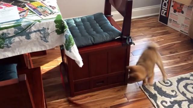リードを捕まえようとテーブルの周りをぐるぐる走り回るワンちゃん