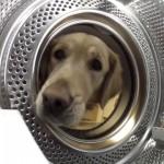 愛犬がお気に入りのテディベアを洗おうとすると、いつの間にか無くなってるんだけど