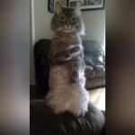 さぁ掛かってきにゃさい!|ポーズを決める猫老師みたいな奇妙なニャンコ(笑)
