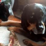 初対面の犬と猫。気にはなるけど、気恥ずかしくて目を合わせられない犬