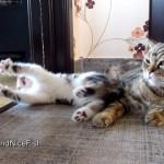 子猫たちが元気良すぎてゆっくりお昼寝できない母猫