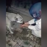 手ですくった水を犬に飲ませてあげている心優しい女性♡