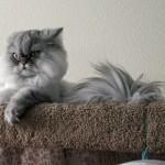 仏頂面な猫の顔にエリザベスカラーをつけた結果、ヤバイことに…