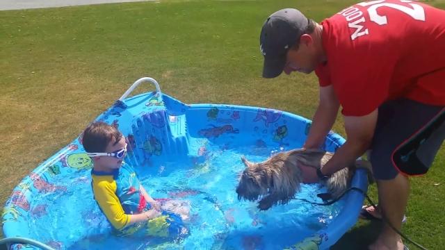 プールに入れようとしたら、入る前から犬掻きをして準備万全なワンちゃん