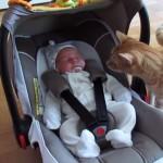 赤ちゃんに興味津々な猫。眠っている赤ちゃんを覗き込んでいたら…