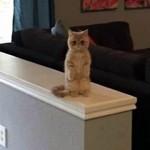 「うちの猫はどうやら自分のことを人間だと思っている」日常写真いろいろ