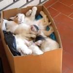 箱寿司の状態で熟睡している子猫たち。或る音が聞こえるとスゴイことに…