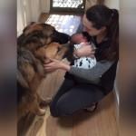 赤ちゃんと初の顔合わせ。やっぱり犬って優しいと感じる瞬間