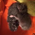 ボートに捨てられた2匹の子猫を保護した結果、その愛らしい姿にほっこり? 11枚/動画3