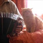 アコーディオンを弾くと腕にしがみついてくる甘え上手な猫が可愛すぎ!♡