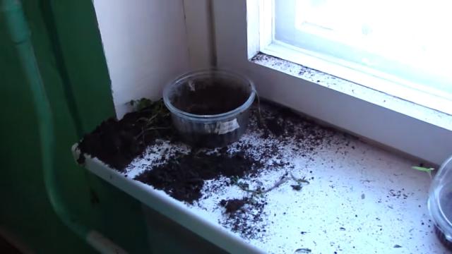 大切な植木鉢を壊された男性。犯人と思しき猫を問い詰めた結果、意外なことに