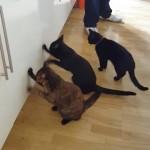 「開かないにゃ~!?」|戸棚を開けようと必死に扉をガリガルする猫たち
