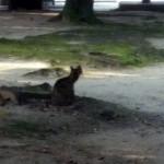 野良猫を発見!ワクワクしながら近づいた結果、驚きの事実が…