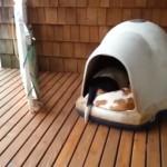 なんてこった!?|犬小屋を覗いたら幸せが溢れ出した♡
