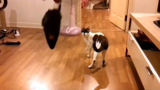 ジャンプに失敗してすっかり自信を失くしてしまったネコ