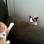 そ~っと顔を覗かせたと思ったら再びそ~っと顔を引っ込める奇妙な子猫(笑)