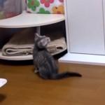 部屋中を走りまわり大はしゃぎの子猫。テーブルに飛び乗ろうとした結果