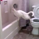 バスタブと便座に足をかけた猫。バスタブに飛び移ろうと力み過ぎた結果