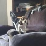 隣のソファーに飛び移ろうとしたワンちゃんが…! 終わり良ければすべて良し(笑)