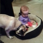 赤ちゃんにベッドを奪われ、取り返そうと必死なワンちゃん(笑)