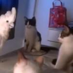 猫の鳴き声を完璧に真似るオウム、猫の集会に参加してみた結果