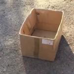 猫がやって来そうな場所にダンボール箱を仕掛けてみた結果。