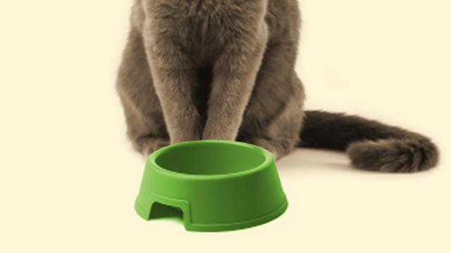 遅刻しそうになり、猫にご飯をやり忘れて家を出てしまった結果、こうなった(笑)