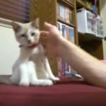 カメラを向けると座りながらポーズをとるネコ、まるで人間みたい(笑)