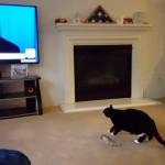 テレビに映った米・共和党大統領候補ドナルド・トランプ氏を見たネコの反応